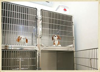 入院室(犬用、猫用)