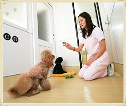 犬の保育園のイメージ