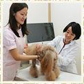 大泉ココ動物病院の診療内容