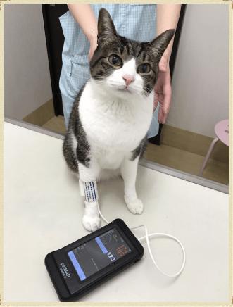 血圧計 (PET MAP)